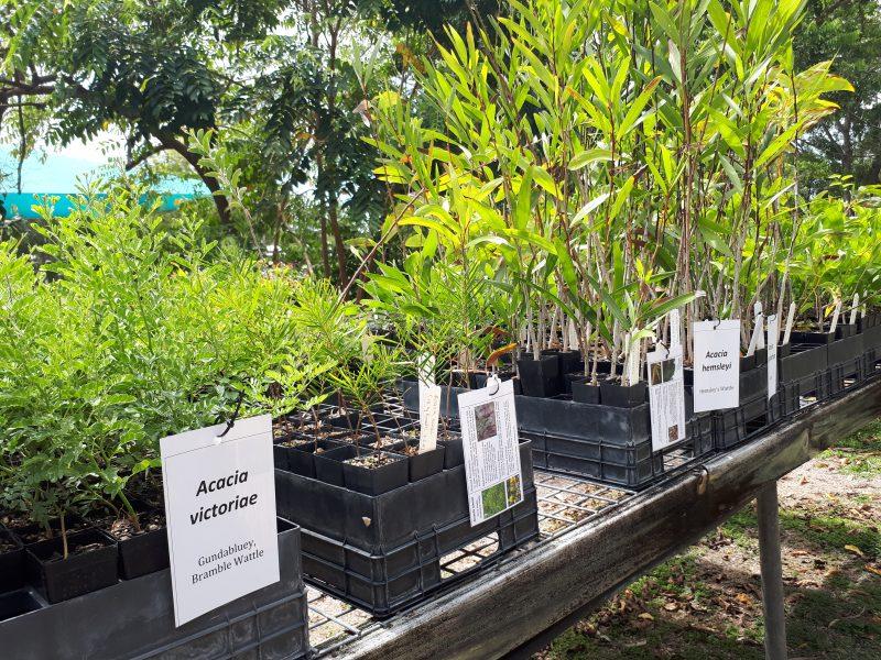 Image of nursery plants
