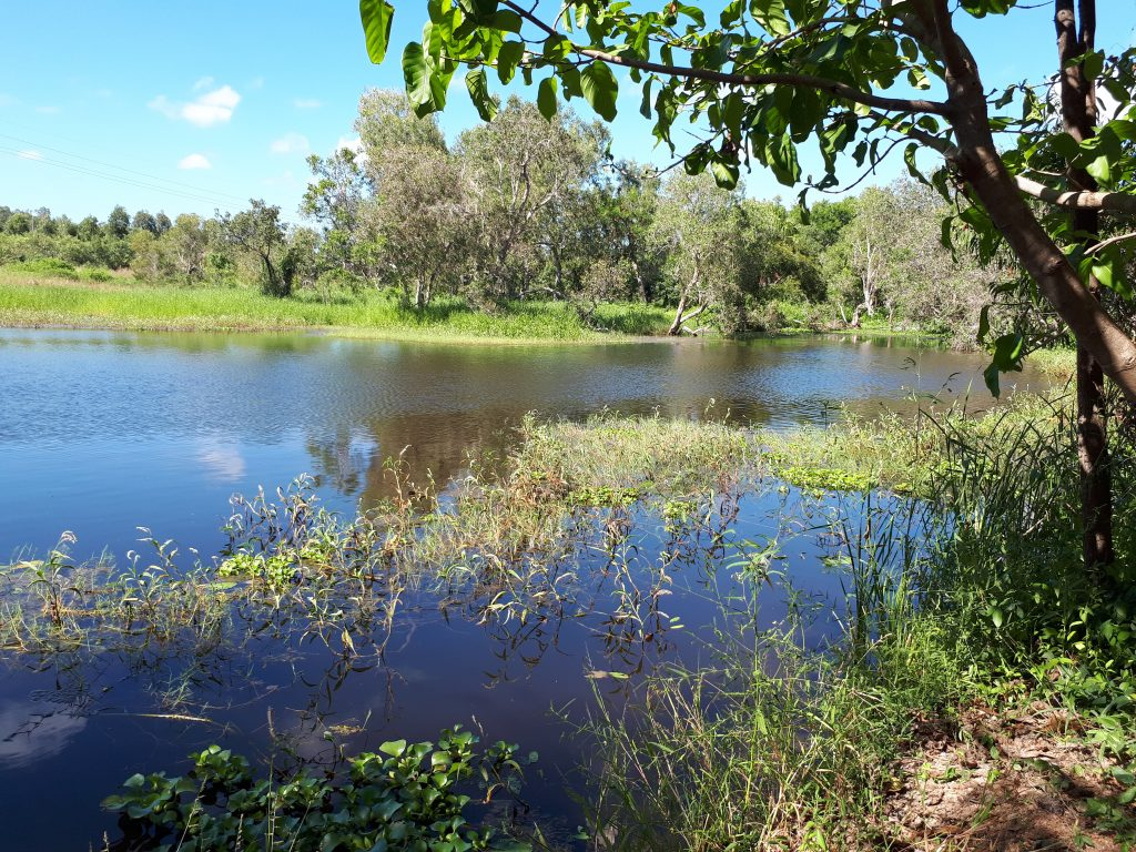 View of Bohle Wetlands Landcare Site